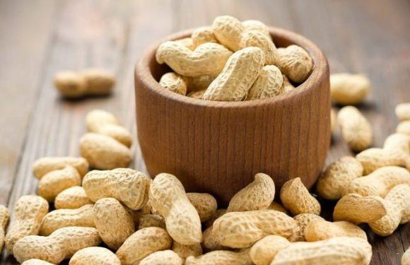 Mengenal Kacang Tanah Hasil Bumi Desa Kedungbendo